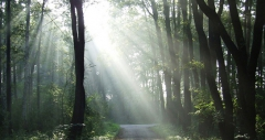Forêts Europe.jpg
