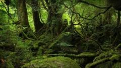Forêt primaire.jpg