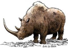 rhinoceros-laineux-eric-le-brun.jpg